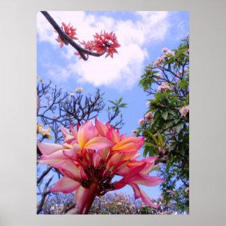 Frangipani Gardens Print
