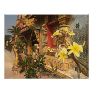 Frangipani in Thailand Poster