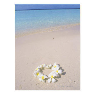 Frangipani on the beach postcard