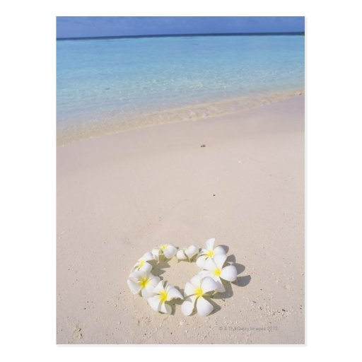 Frangipani on the beach postcard