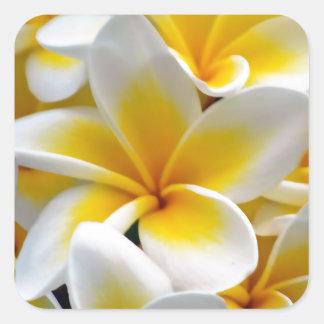 Frangipani Plumeria Flower Photo Square Sticker