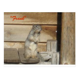 Frank-squirrel Postcards