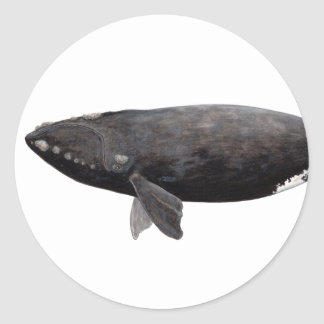 Frank whale of Atlantic Round Sticker