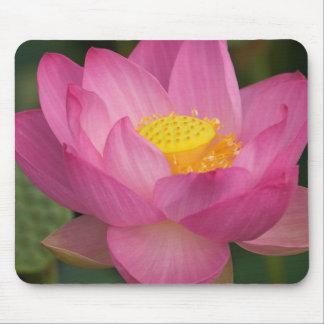 Franklin NC, Perry's Water Garden, Lotus 2 Mouse Pad