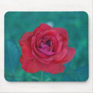 Franks Rose Mousepad