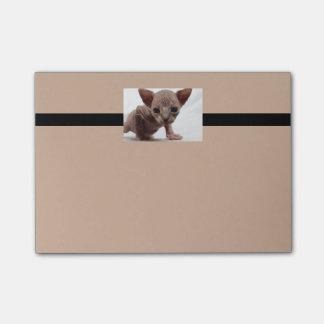Freaky Cute Furless Sphynx Kitten Post-it Notes