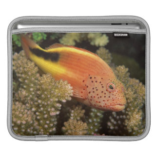 Freckled hawkfish perches on stony corals iPad sleeve