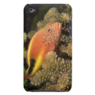 Freckled hawkfish perches on stony corals iPod touch Case-Mate case