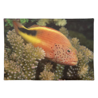 Freckled hawkfish perches on stony corals placemat