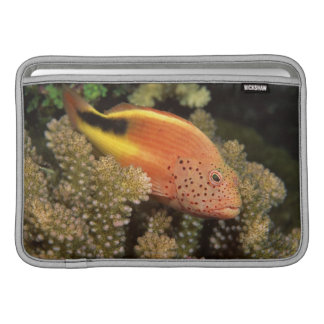 Freckled hawkfish perches on stony corals sleeve for MacBook air