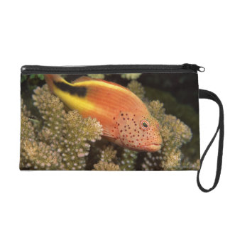 Freckled hawkfish perches on stony corals wristlet purse