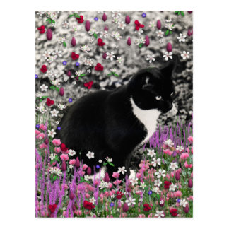 Freckles in Flowers II - Tuxedo Kitty Cat Postcard