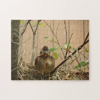 Fred the baby cardinal -- puzzle