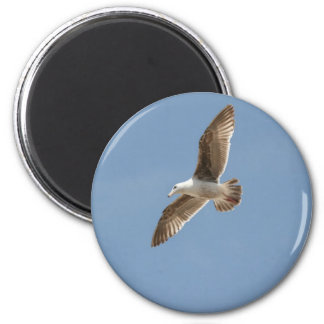 Free as a Bird (Flying Seagull) 6 Cm Round Magnet