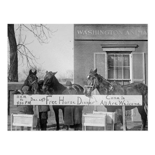 Free Dinner for Horses, 1923 Postcard