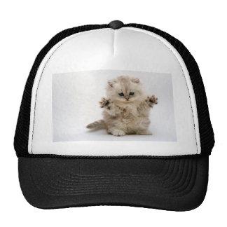 Free Hugs Kitten Cap