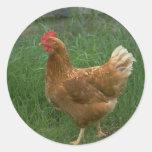Free Range Chicken Round Sticker