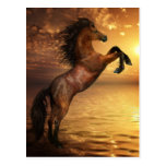 Freedom Rearing Wild Horse Postcards