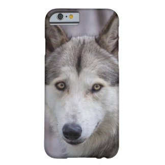 Freedom Wolf Barely There iPhone 6 Case