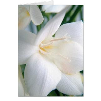 Freesia | White | Greeting Card