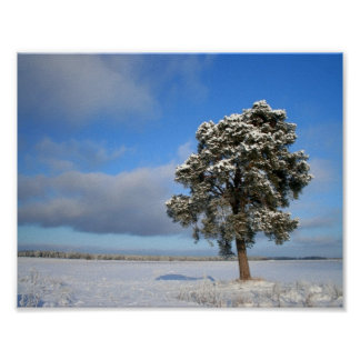 Freezing Solitary Tree Poster