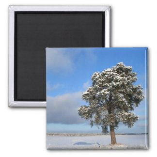 Freezing Solitary Tree Square Magnet
