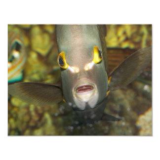 French Angelfish 11 Cm X 14 Cm Invitation Card