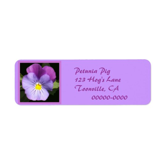 French Blue Purple Pansy