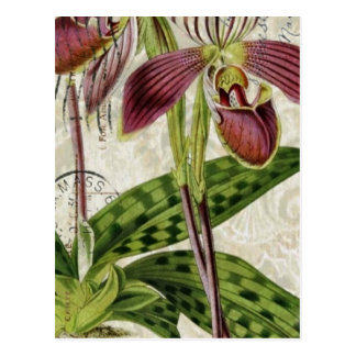 french botanical art shabby chic purple orchid postcard