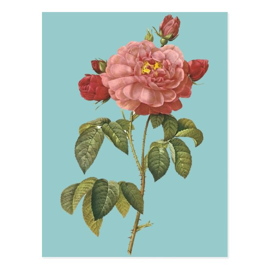 French Botanical Beauty *Vintage Flowers* Postcard