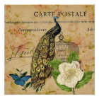 french botanical camellia birdcage vintage peacock poster
