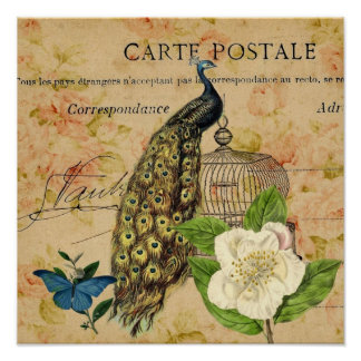 french botanical camellia birdcage vintage peacock poster