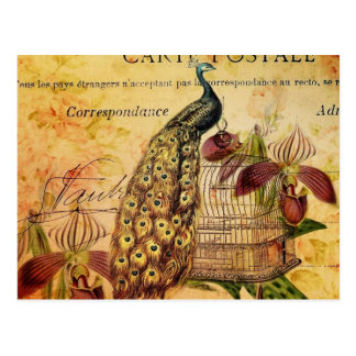 French Botanical orchid modern vintage peacock Postcard