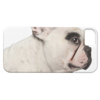 French Bulldog (4 years old) close-up iPhone 5 Cases
