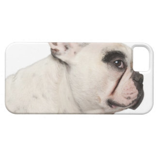 French Bulldog (4 years old) close-up iPhone 5 Cover