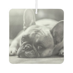 French Bulldog Gifts For Pets Owners Zazzle Uk