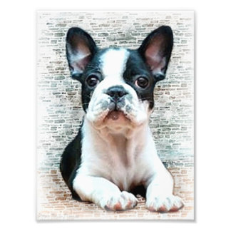French bulldog dog art photo