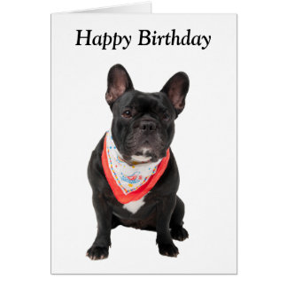 French Bulldog, dog cute photo happy birthday card