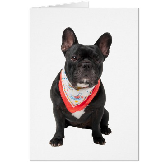 French Bulldog dog photo blank greetings note card