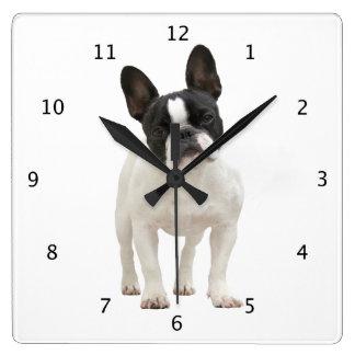 French Bulldog dog puppy cute beautiful photo Square Wall Clock