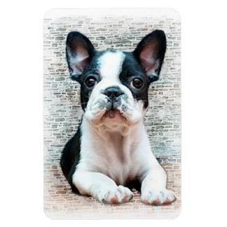 French bulldog dog rectangular photo magnet