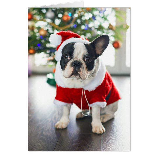 French Bulldog Dressed Up In Santa Costume Card