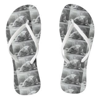 French Bulldog flip flops