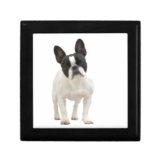 French Bulldog gift box jewelry box trinket box