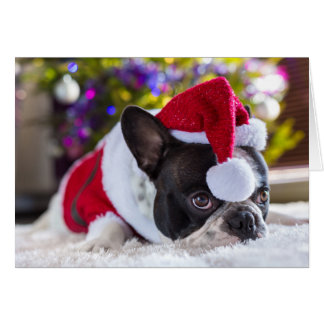 French Bulldog In Santa Hat Under Christmas Tree Card