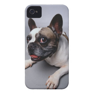 French Bulldog iPhone 4 Case-Mate Case