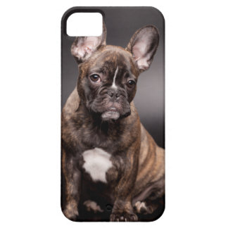 French Bulldog iPhone 5/5S Case