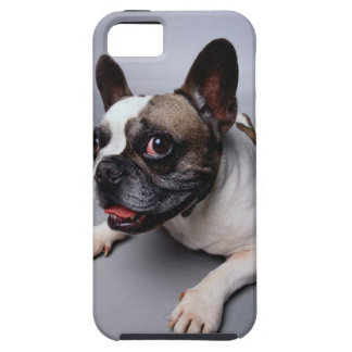 French Bulldog iPhone 5 Cover