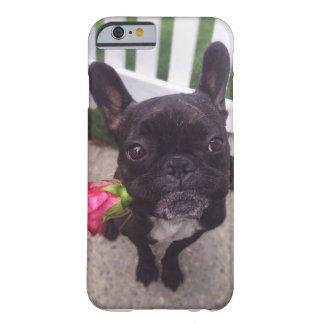 French Bulldog iPhone Case Barely There iPhone 6 Case