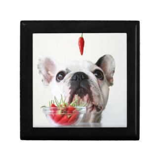 French Bulldog Looking At A Red Pepper Gift Box